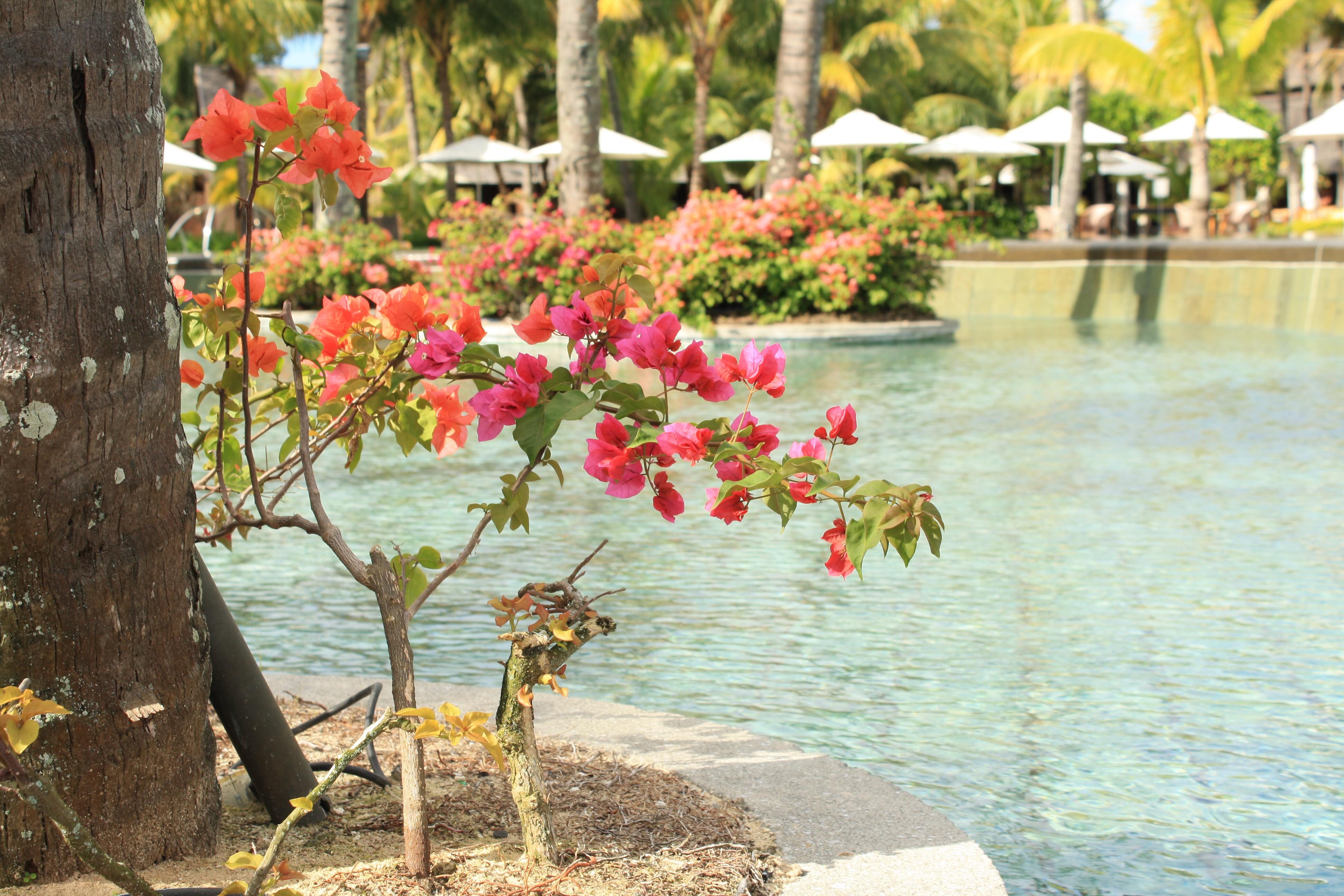 Mauritius Photo Diary